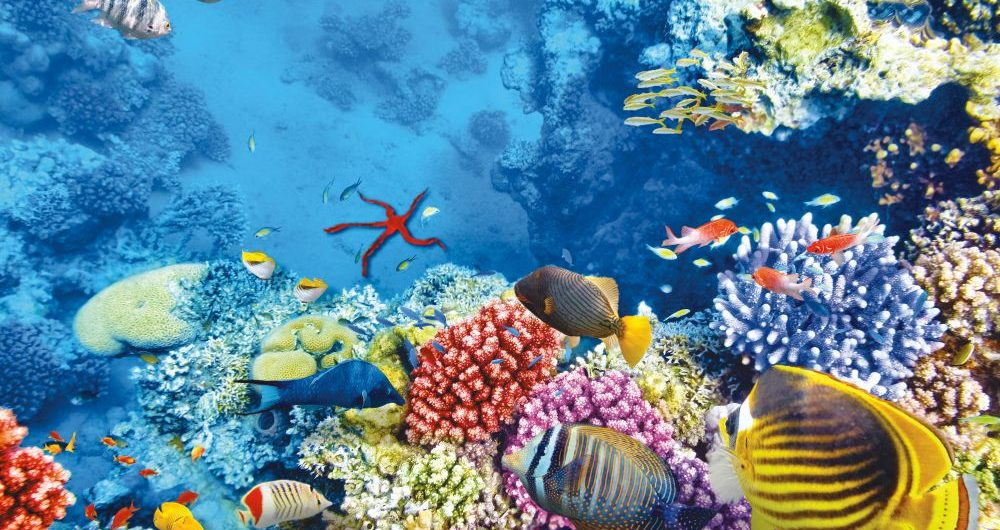 Hurghada snorkeling and diving