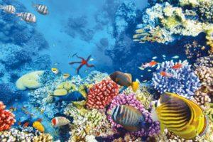 Hurghada snorkeling and diving